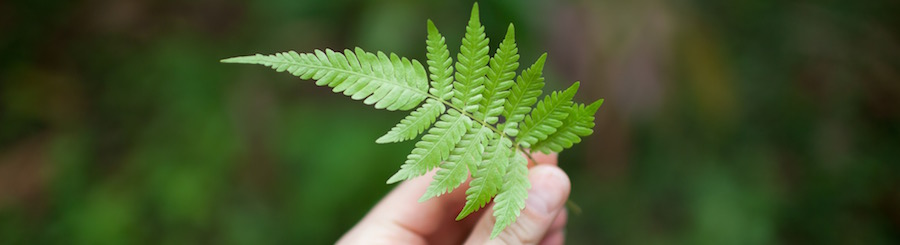 picture of a fern in costa rica