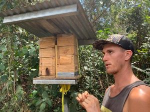 Drew talking about stingless bees